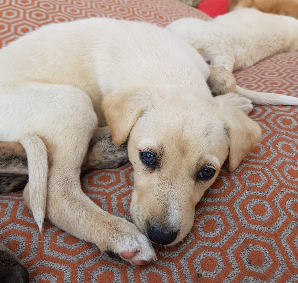 Surviving the First 24 Hours With Your New Puppy
