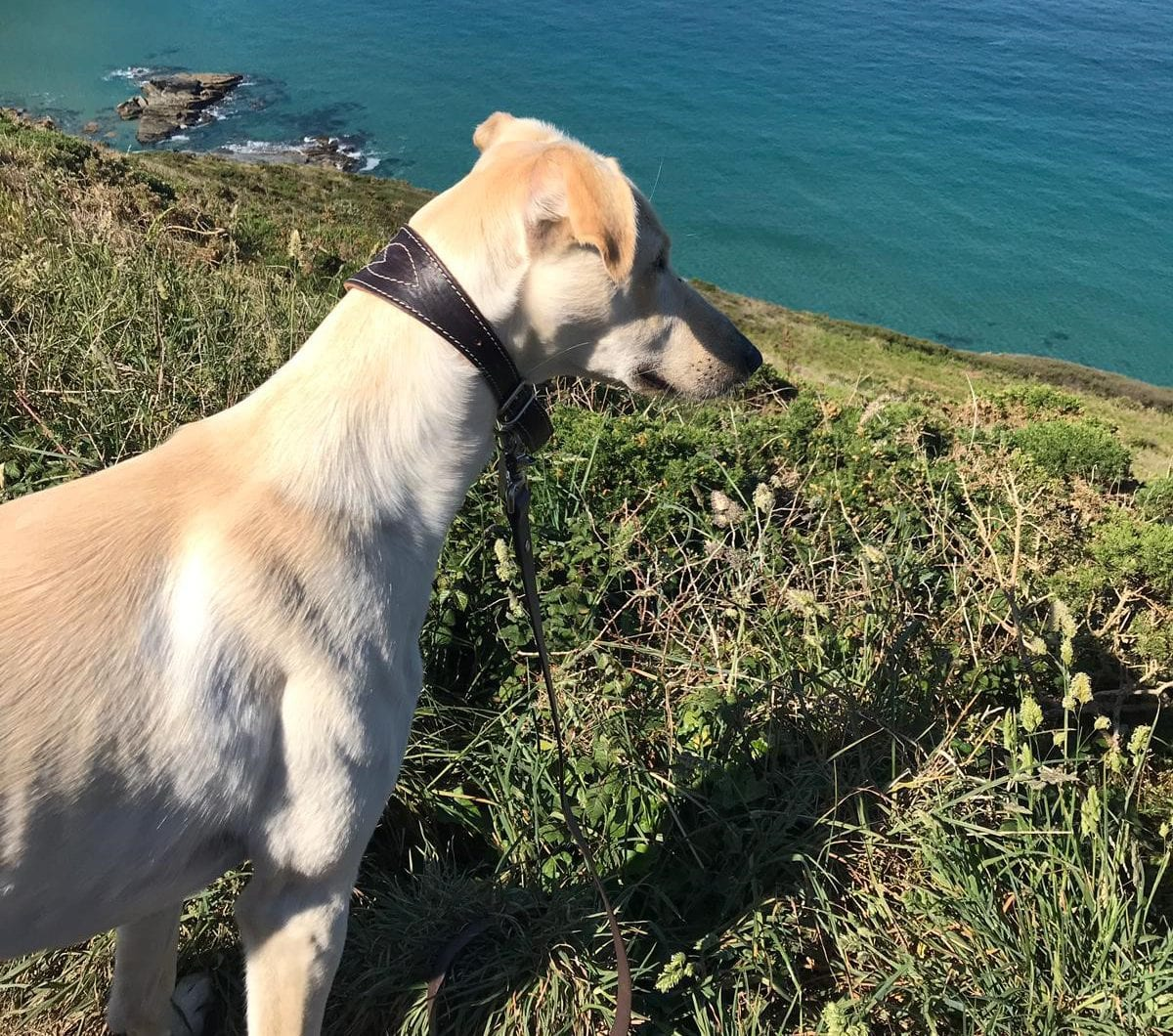 Taking Your Dog on Holiday