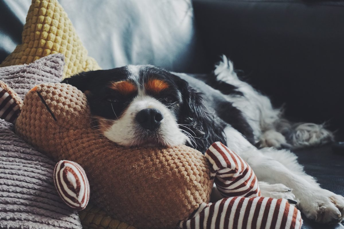 Indoor Brain Games For You & Your Pup