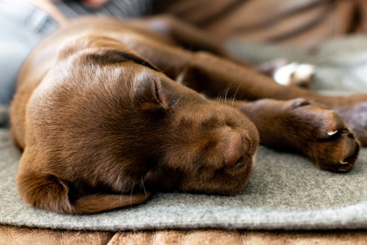 7 Tips To Stop Your Puppy Crying At Night